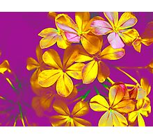 Colours Flowers Photographic Print