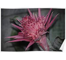 Flower Beauty - 11 Poster