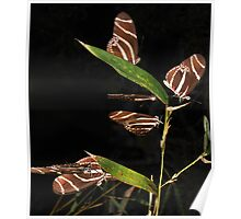 Magical Gathering Of The Zebra Butterflys Poster
