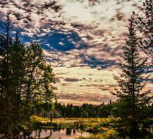 Beaver Pond Sky by Wib Dawson