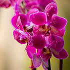 Blooming Orchids by Claudia Heidelberger