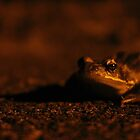 Night Frog by Hannah Taylor
