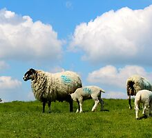 Ewe and me and a sky so blue by WhirlwindPress