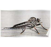 Insect that devours flys Poster