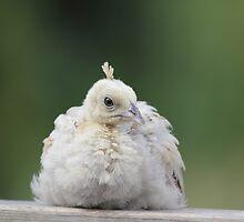 Baby Peachick by KansasA