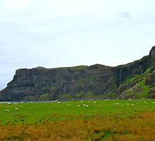 Sheep on Talisker Beach by WhirlwindPress