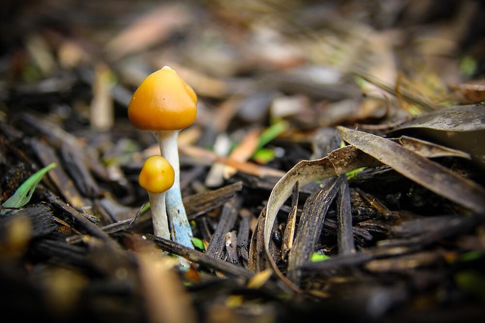 Pair of Mushrooms by jamjarphotos