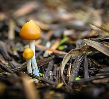 Pair of Mushrooms by jamjarphotos