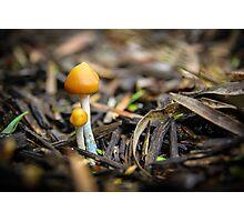 Pair of Mushrooms Photographic Print