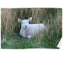 Mary Had a Little Lamb Poster