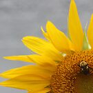 Sunshine on my shoulder by sky2007