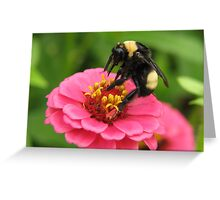 Bumble Bee on Red Zinnia Greeting Card