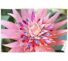 Pink Floral Succulent Poster