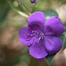 Purple Flower by jamjarphotos