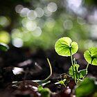 Violet Leaves  by jamjarphotos