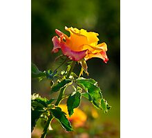 Raw Beauty Photographic Print