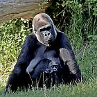 Durrell Wildlife park image 1 mother and baby by Gary Power