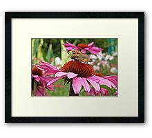 Tortoise Shell Butterfly Framed Print