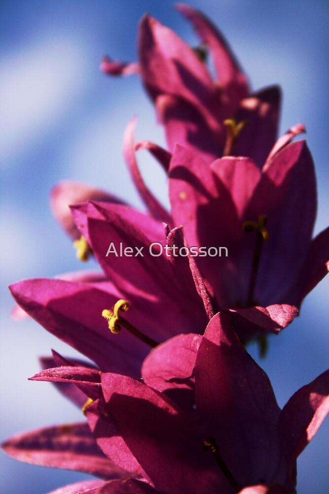 Flower by Alex Ottosson