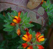 Bush flowers by Michael Matthews