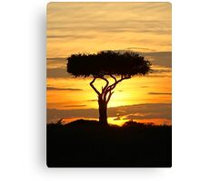 Boscia tree against the Kenyan sunset (watercolour) Canvas Print