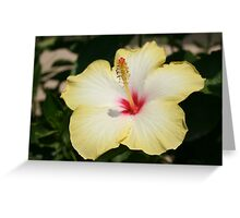Yellow Hibiscus With Garden Background Greeting Card