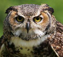 Owl 2 by annalisa bianchetti