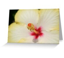 Stamen With Yellow Hibiscus Petal Background Greeting Card