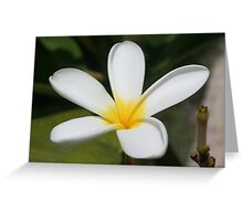 A Single Plumeria Flower Macro Greeting Card