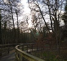Evening Walk by Kieran Taylor