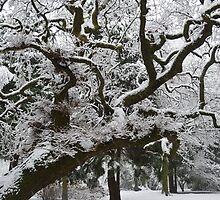 Snow on Tree by Kieran Taylor