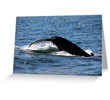 Diving Humpback Greeting Card