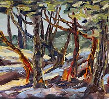 End of Day with Arbutus  by TerrillWelch