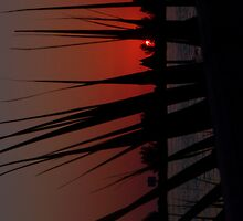 Sunset Thorugh The Palm by Zzenco