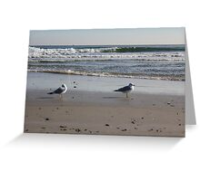 Beach Birds Greeting Card