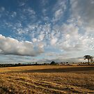 Summer Skies in evening light by StephenRB