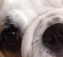 Bulldog Face Sticker