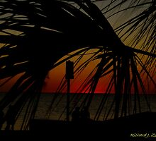 Palm in After Glow by Zzenco