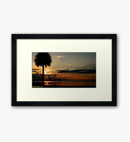 Seagull Sunset Framed Print