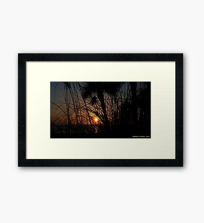 Sunset Through The Grass Framed Print