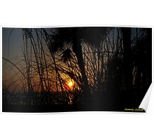 Sunset Through The Grass Poster
