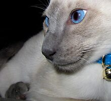 Siamese! by Sally Green