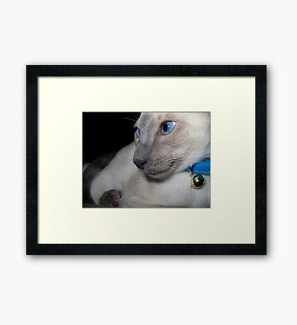 Siamese! Framed Print