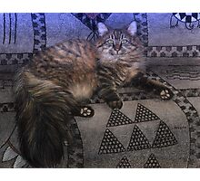 Long Haired Grey Tabby Cat Portrait Photographic Print