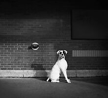 Alert Dog by printscapes