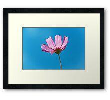 Flower - Growing up in Philadelphia Framed Print
