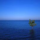 Lone Mangrove by Alihogg
