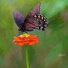 Butterfly 4 Art Print by sturgils