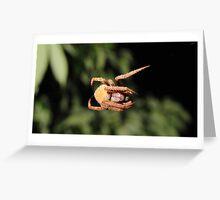 ARACHNOPHOTOGRAPHIC Greeting Card