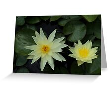 White Yellow Lillies Greeting Card